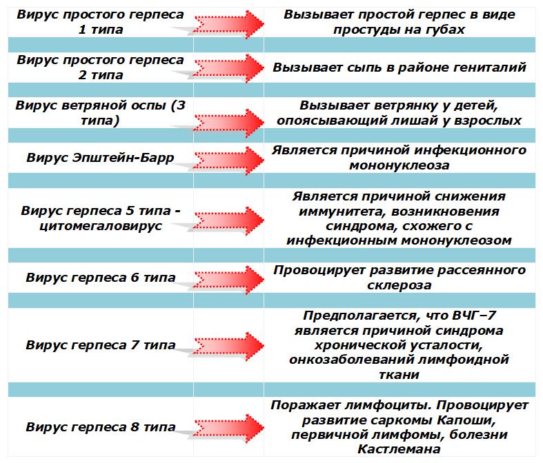 Вирусы герпеса